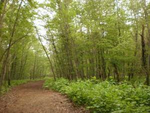 『~森林浴~』