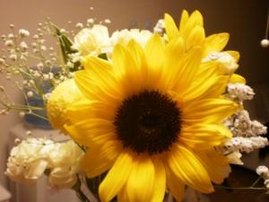 『今週末のお花・パワフル全快ひまわりちゃん♪』