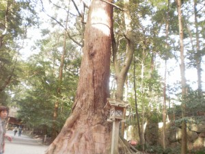 『大好きな大木です♪』