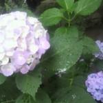 2012070716460001.jpg